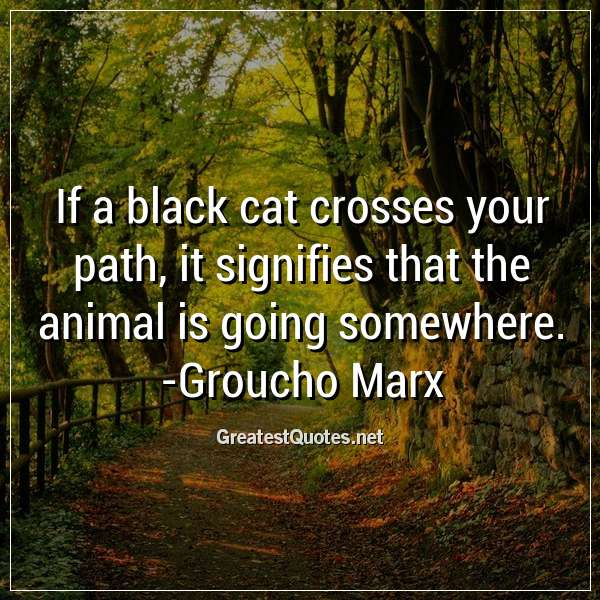 If a black cat crosses your path, it signifies that the animal is going somewhere. - Groucho Marx