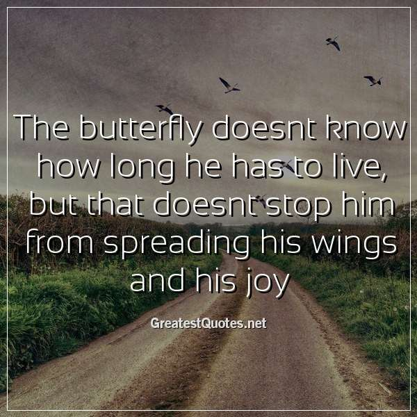 The butterfly doesnt know how long he has to live, but that doesnt stop him from spreading his wings and his joy.