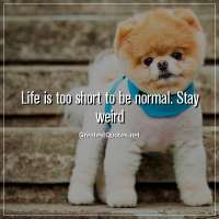 Life is too short to be normal. Stay weird